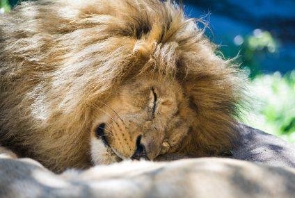 GetBack pogrzebał Lion's Bank. Marka zostanie zlikwidowana