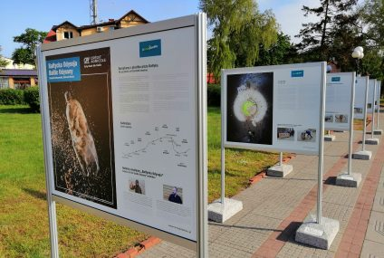 """Śmieciowe """"skarby Bałtyku"""" na wystawie w nadmorskich kurortach"""