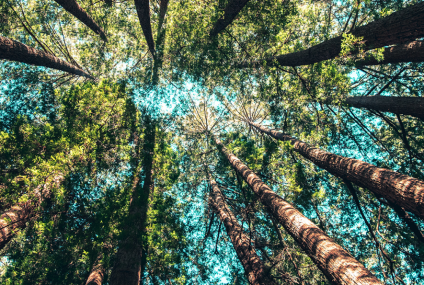 Mastercard otwiera globalne Laboratorium Innowacji zrównoważonego rozwoju
