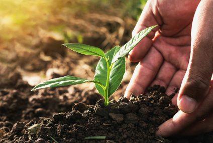 Nowa akcja Mastercard i JYSK. Od każdej transakcji kartą zostanie przekazane 2 euro na sadzenie drzew